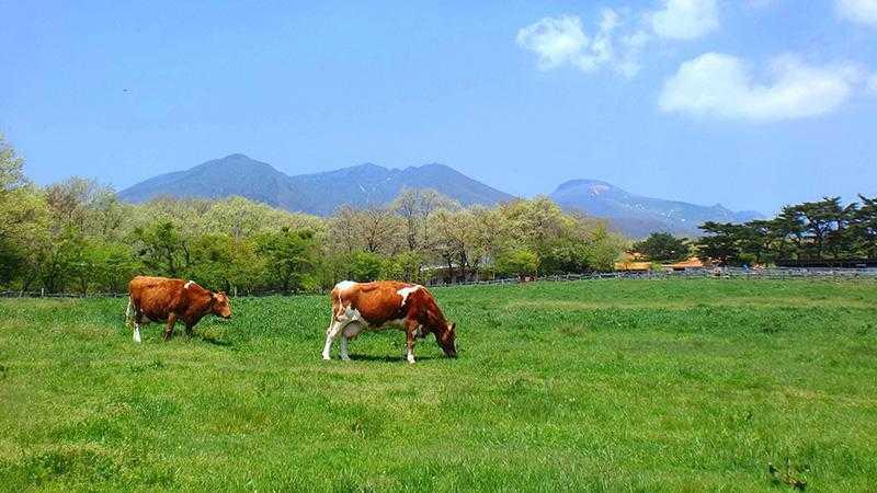 那須高原南ヶ丘牧場