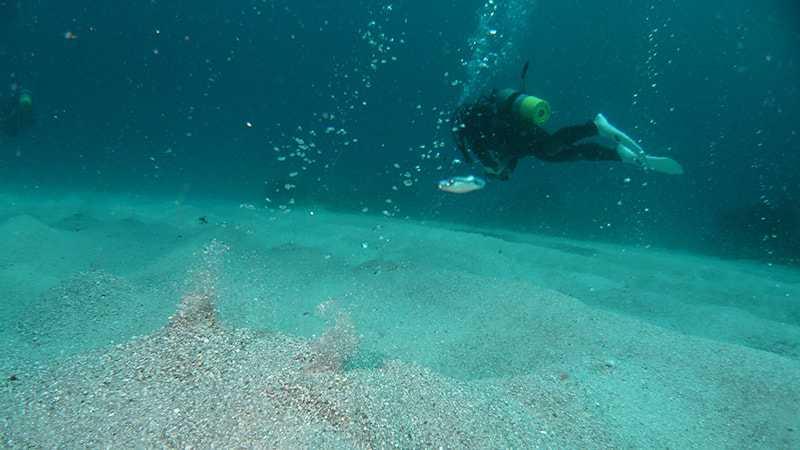 伊豆 式根島 ダイビング