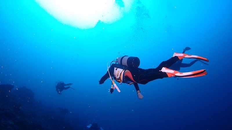 伊豆七島 八丈島 ダイビング
